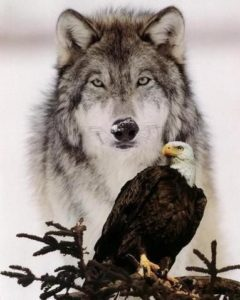 Witte arend wolf